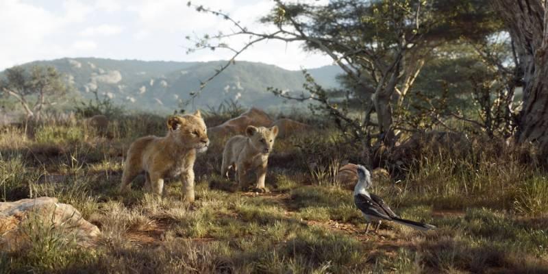 Jak to jest zobaczyć nowego króla lwa, gdy nigdy nie widziałeś starego króla lwa.